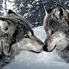 Psychologie animale